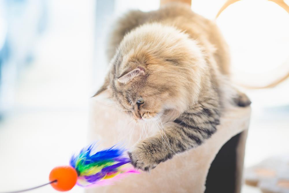 Federspielzeug für Katzen
