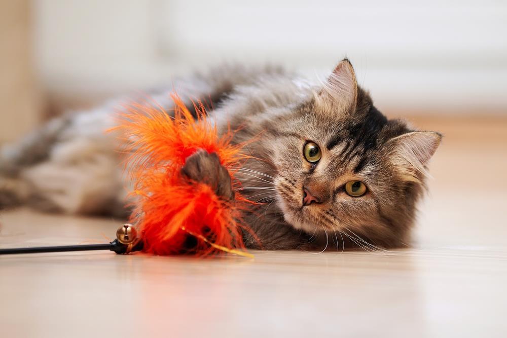 Interaktives Spielzeug für Katzen