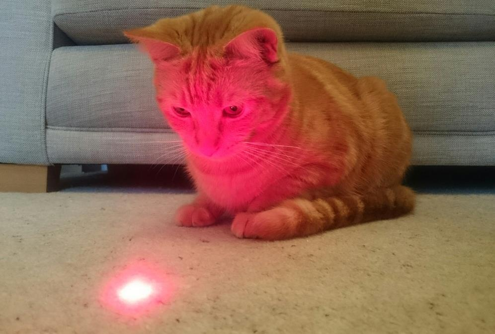 Katzen-Laserspielzeug