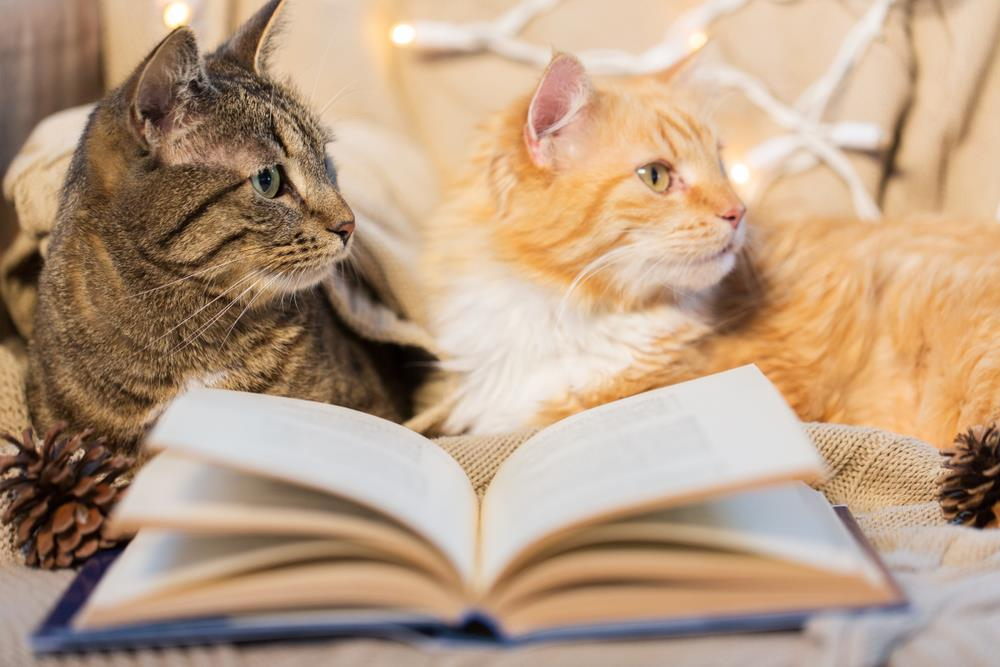 Katzenerziehung mit Büchern