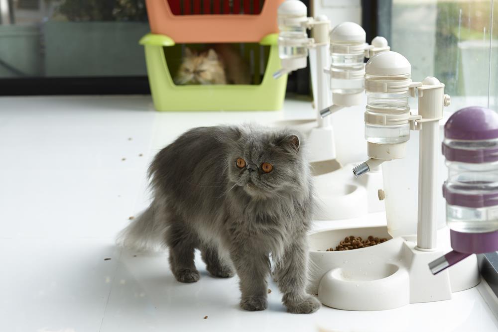 Futterspender für Katzen