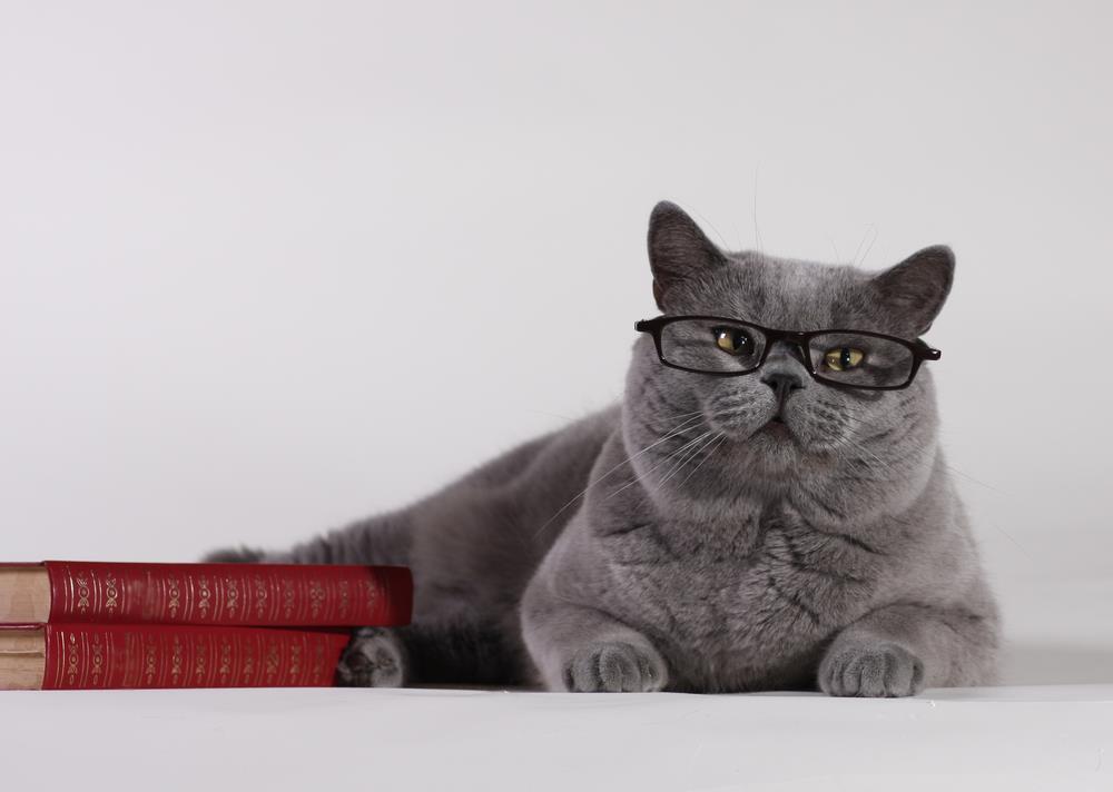 Geschenkbücher über Katzen