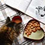 Katzenfutter Aufbewahrungsboxen