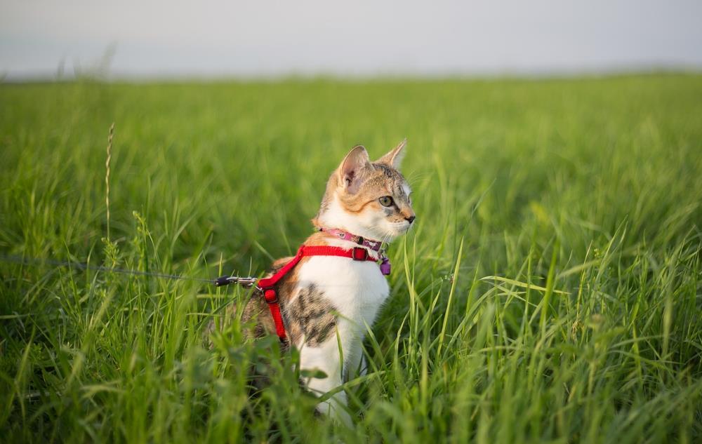 Katzengeschirr