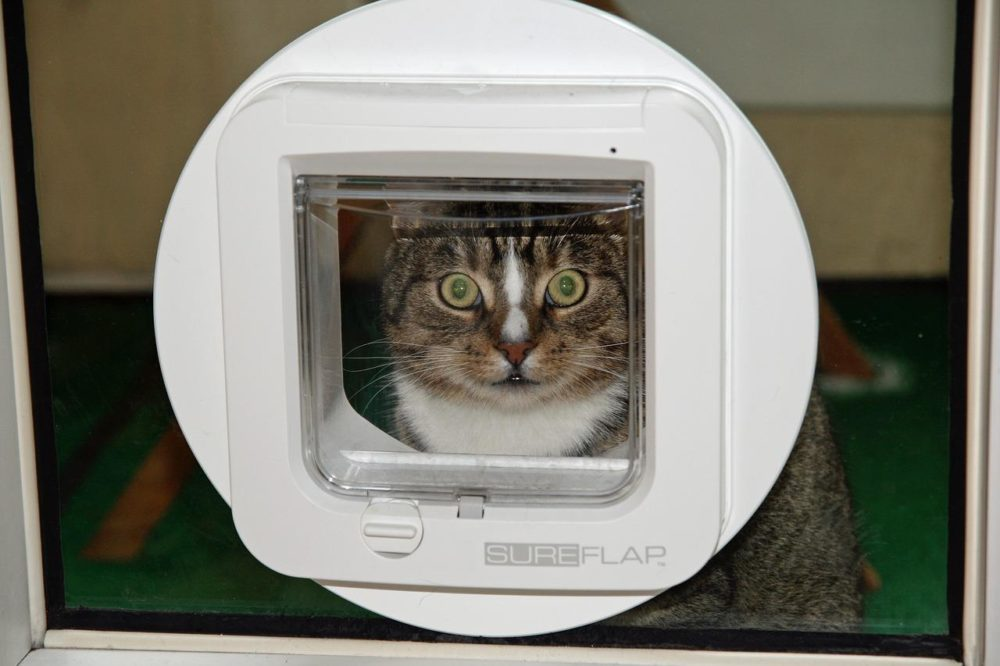 Moderne Katzenklappe