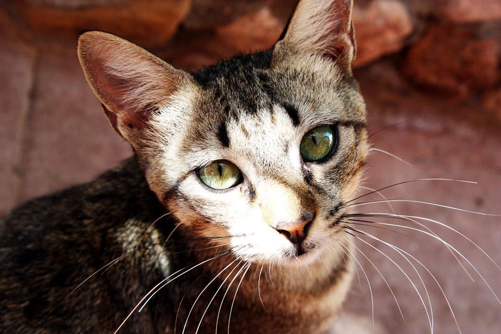 Katzenpsychology