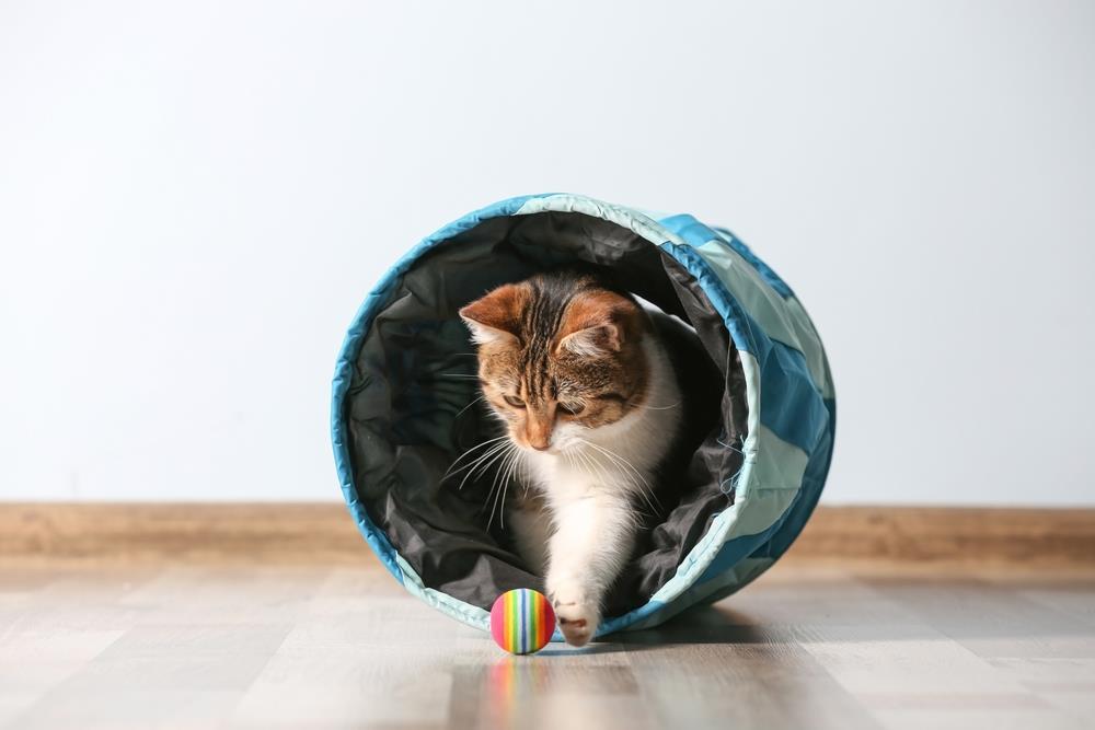 Katzentunnel