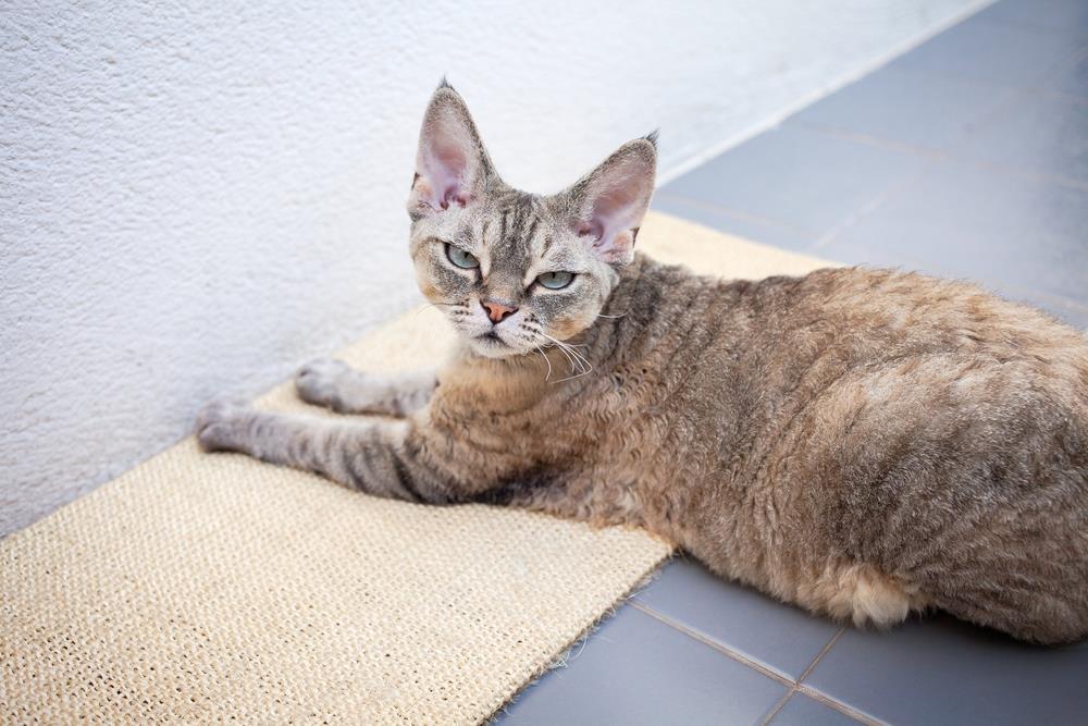 Kratzmatte für Katzen