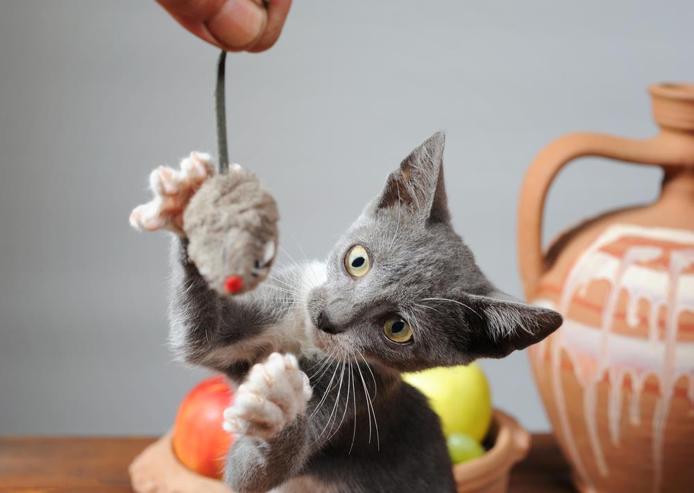 Plüschspielzeug für Katzen