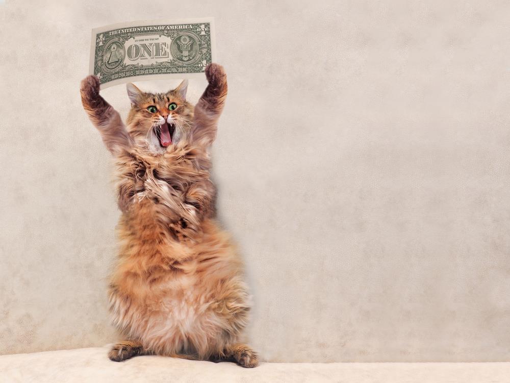 Geld sparen bei der Anschaffung eines Haustieres