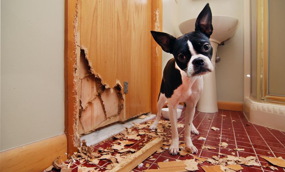 Hunde-Haftpflichtversicherung