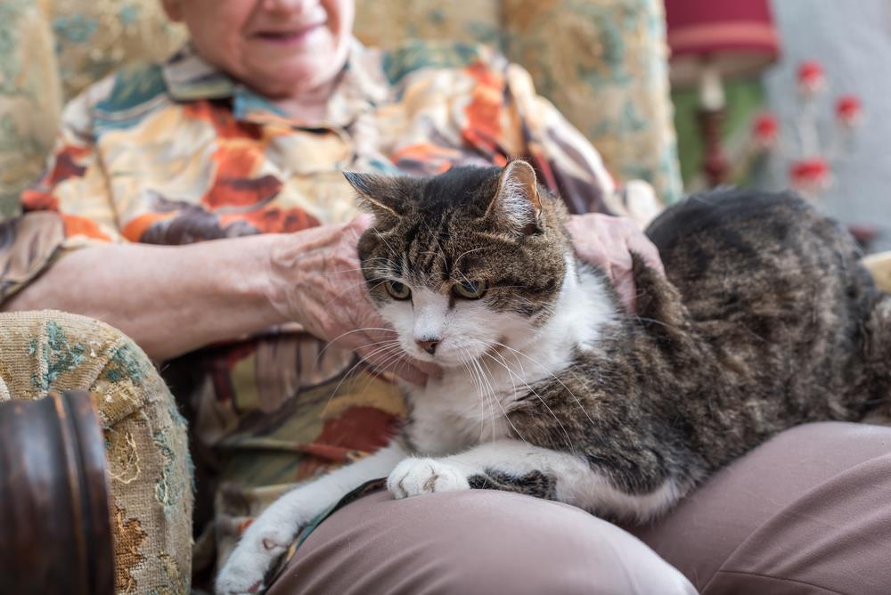 Katzen und alte Menschen