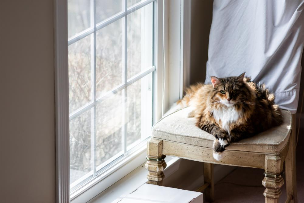Katzen während des Urlaubs zuhause