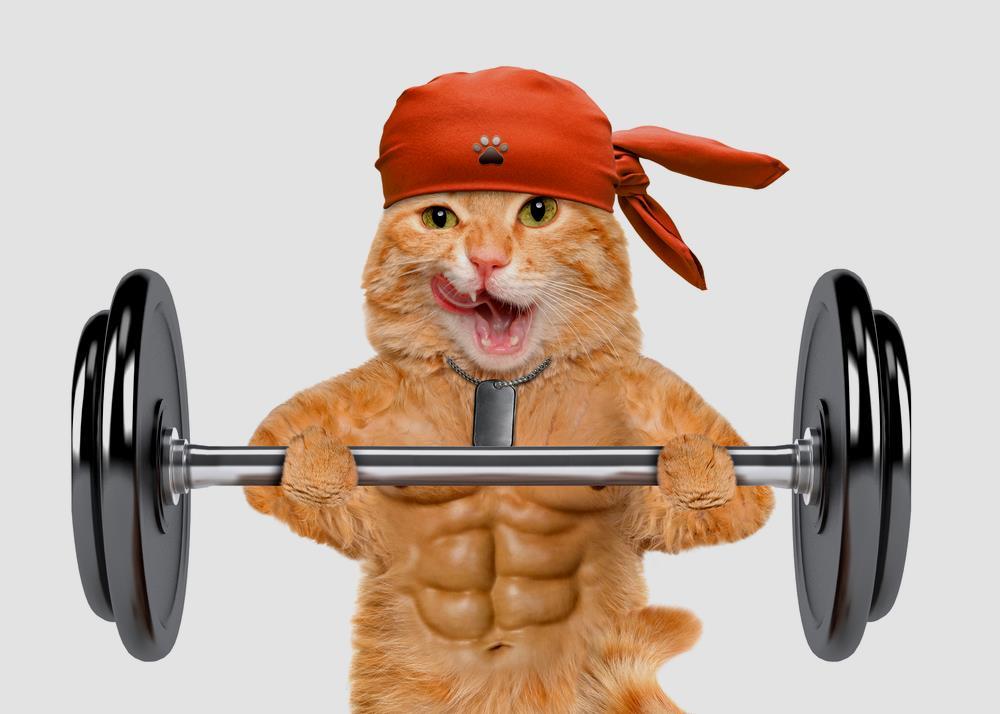 Katzensport