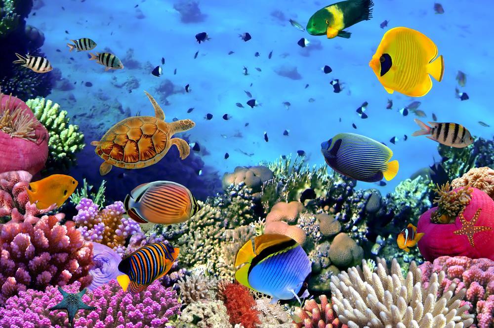 Saltzwasserfische in Ägypten