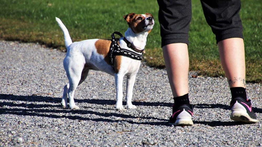 Haustiere trainieren