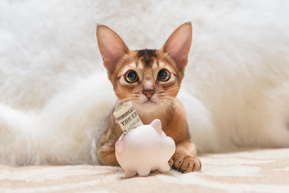 Folgekosten einer Tierhaltung